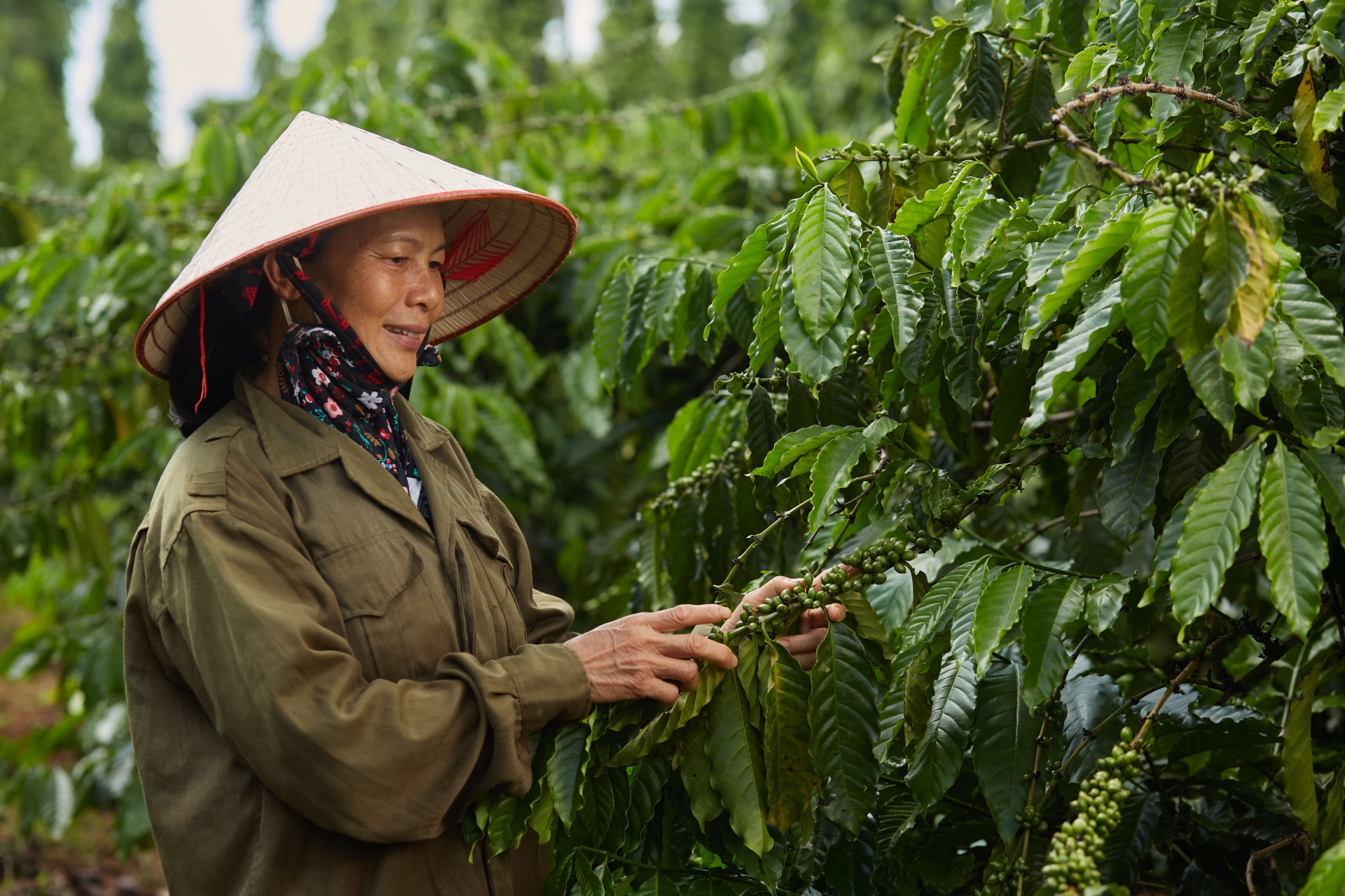 NESCAFÉ Plan in Vietnam marks 10 years of sustainable coffee production