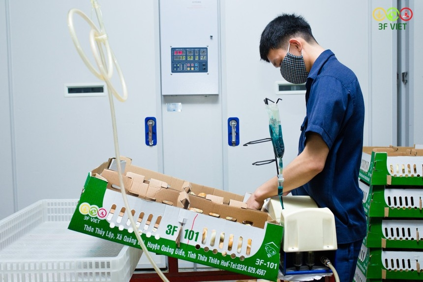 Masan MEATLife enters poultry market by buying into 3F VIET